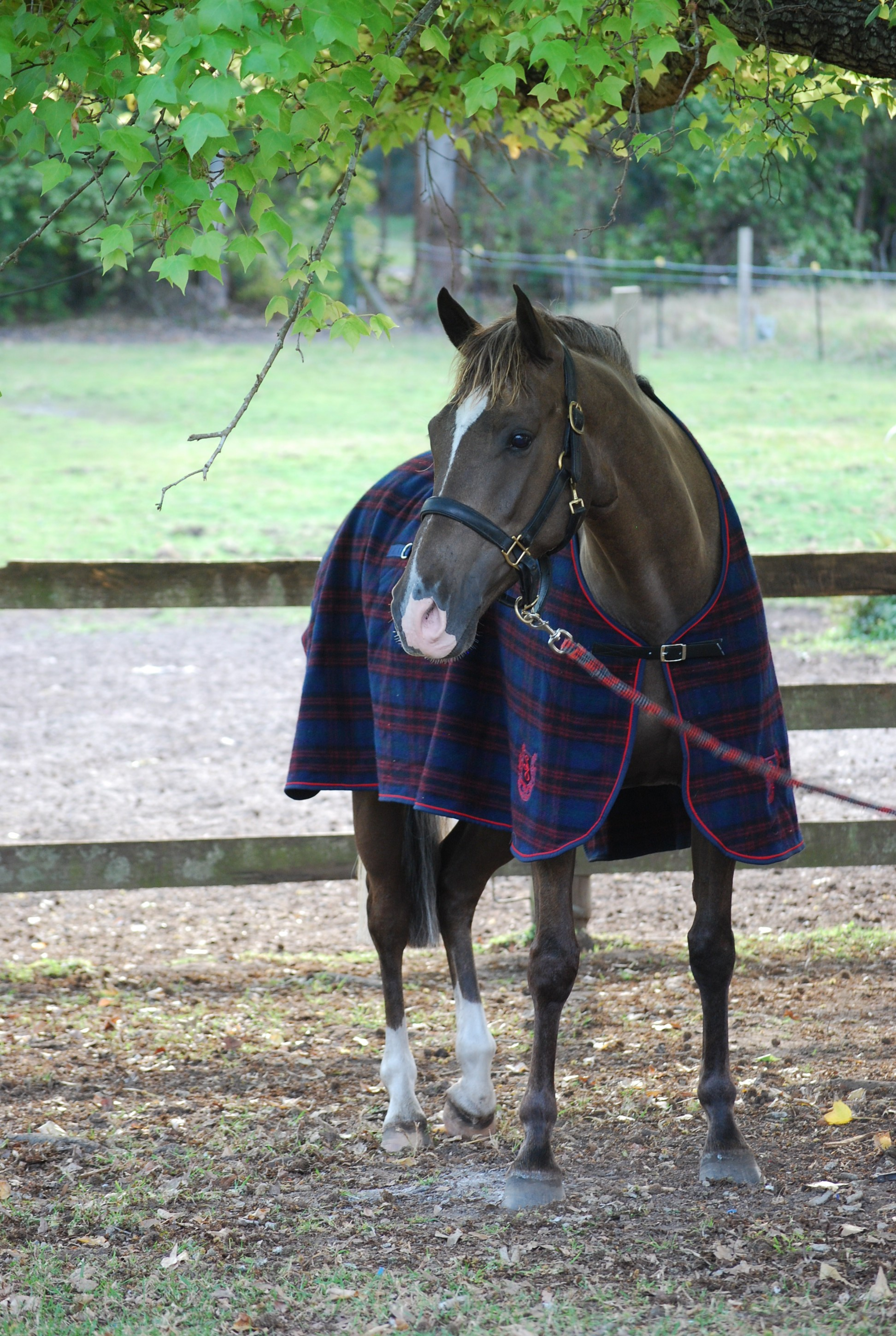 WOOL NAVY/RED CHECK HORSE RUGS