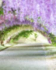 Enchanting-Travels-Japan-Tours-Wisteria-