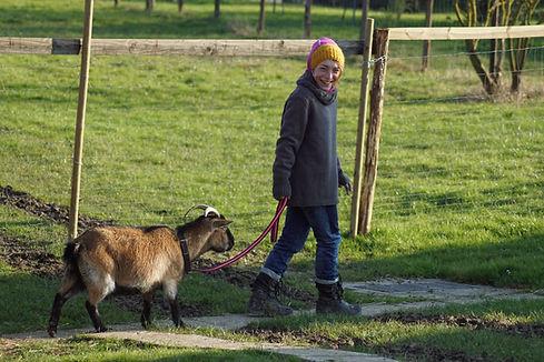 | Ferme d'élevage d'Alpagas Le Clos Tranquille | Sarthe - France