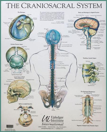 het-cranio-sacrale-systeem-832x1024.jpg