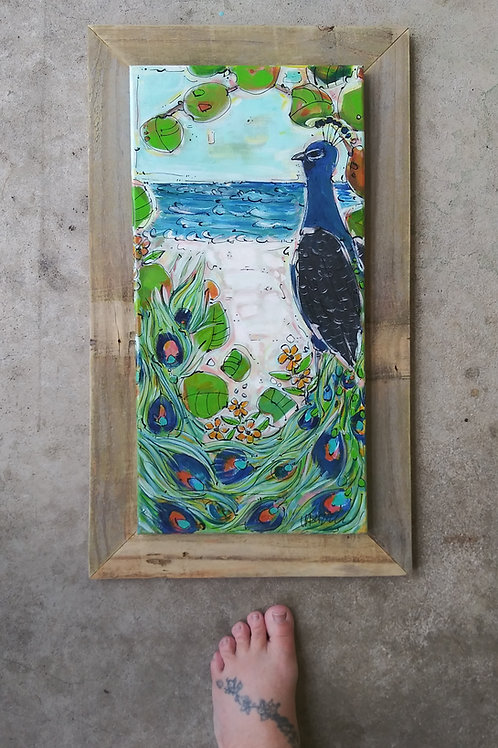 Canaveral Peacock 4