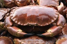 krabbe.jpeg