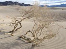Sand Dunes of the Refuge