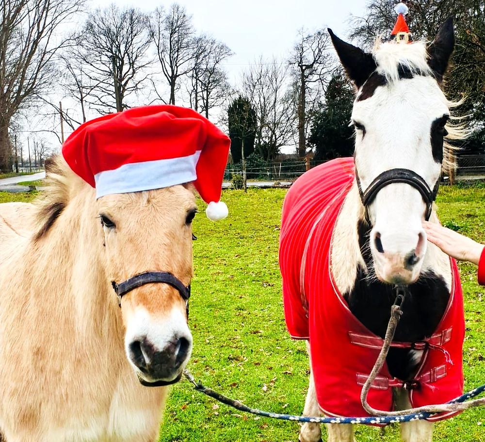 Two horses celebrating Christmas