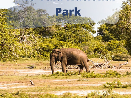 A Complete Guide to Yala National Park