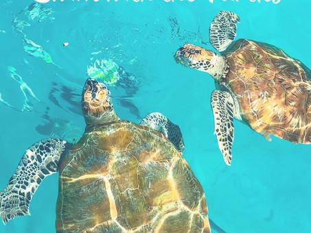 Pulau Redang: Swim with the Turtles