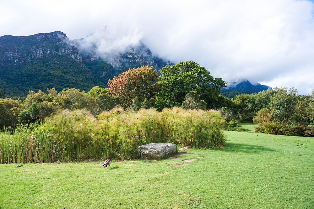 Kirstenbosch National Garden