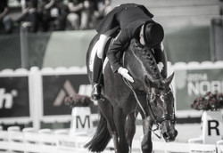 passion for the equestrian sport