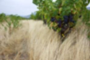 Nos vignes en BIO