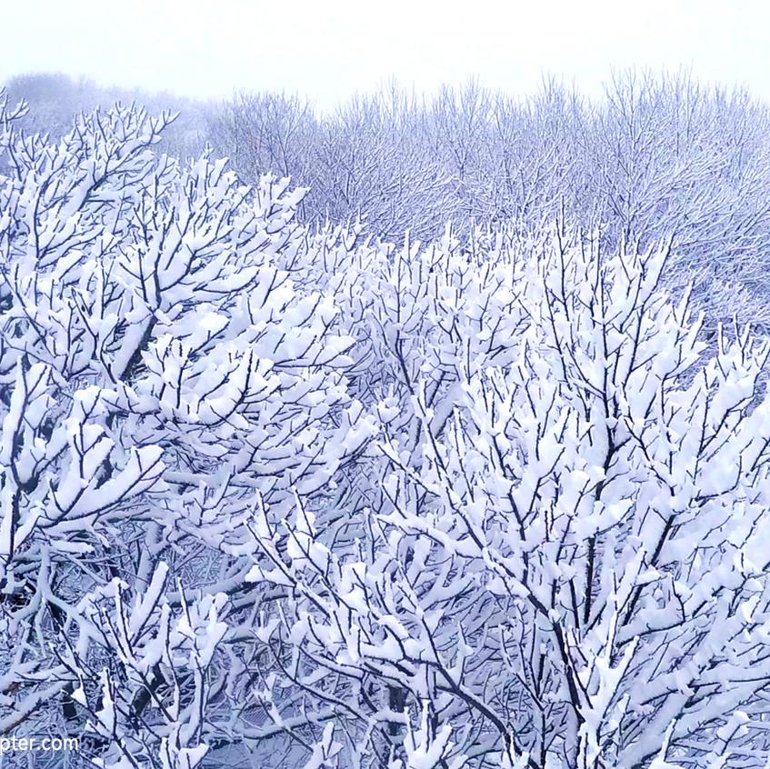 Lalín_nieve_2016_árboles_nevados