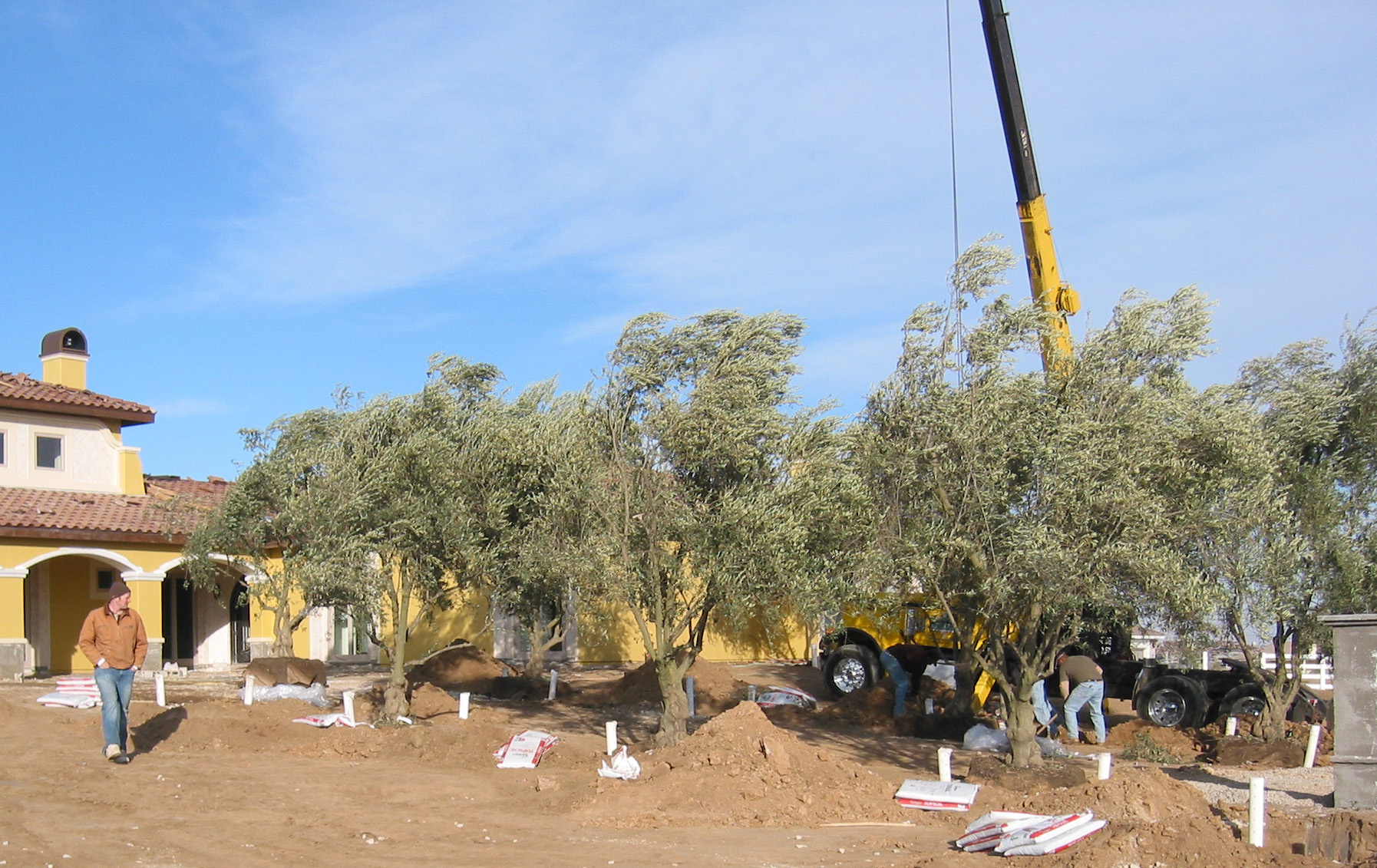 Driveway with olives 2.JPG