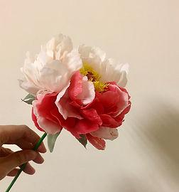 紅白雙色牡丹-1.jpg