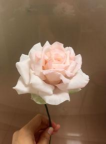 粉高心玫瑰.jpg