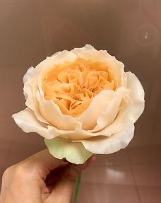 茱麗葉玫瑰.jpg