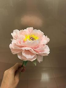 粉色牡丹.jpg