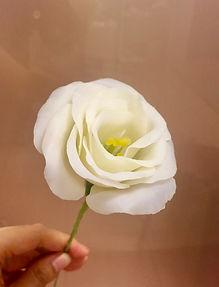 白桔梗.jpg