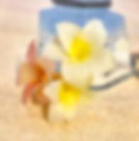 蜂蠟花-雞蛋花-2.jpg