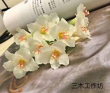 油桐花-2.jpg