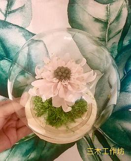 玻璃罩-松蟲草.jpg