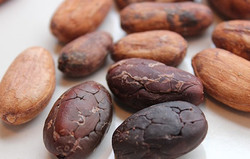 cacao-beans 2