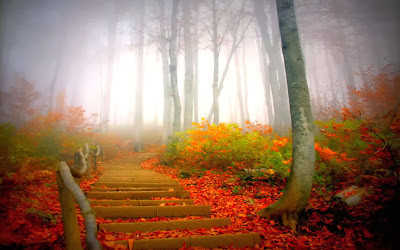 fall leaves on outdoor staircase
