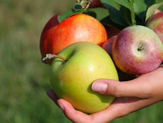 a hand holding apples