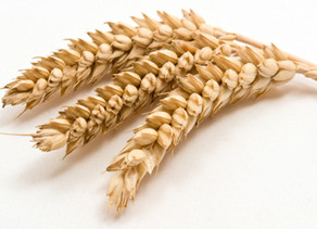 The Gluten-free Diet: Myth or a Real Concern?