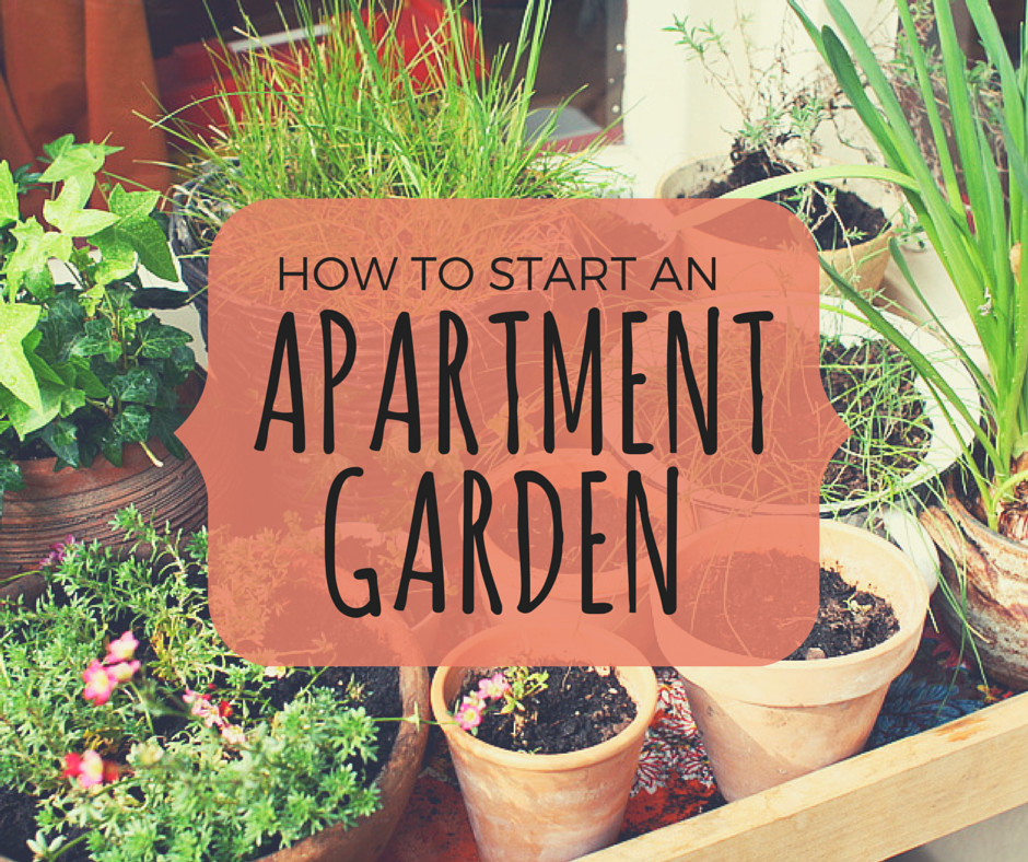 Potted plans and the words How to Start and Apartment Garden
