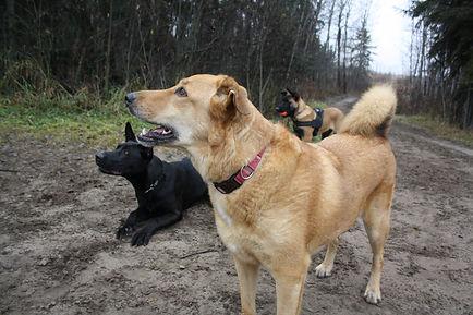 home based dog boarding
