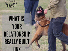What is your relationship with your dog REALLY built on?