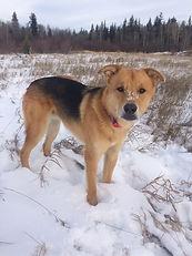 rescue dog in edmonton