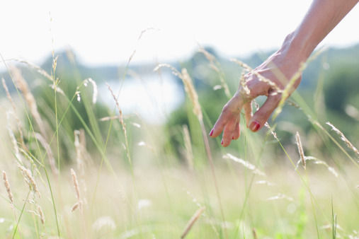 woman-touching-tall-grass-picture-id1717