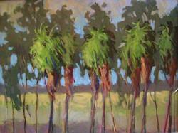 Cedeno_RowOfPalmTrees