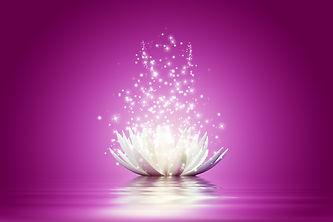 lotus flower purple.jpeg