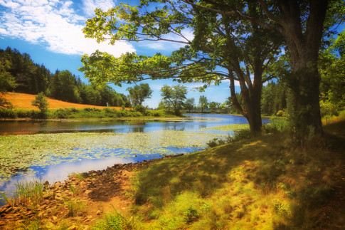 Summer Afternoon On Long Pond