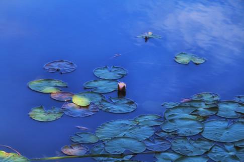 Monet In Maine