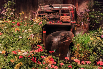 Rusty Truck Adorned With Flowers