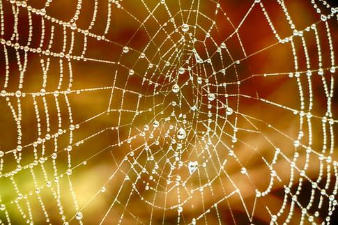 Sun Lite Spiderweb