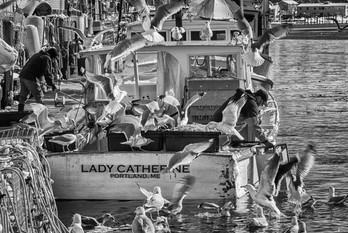 Cafe Lady Catherine Black And White