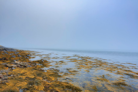 Foggy Coast Of Maine