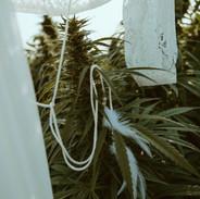 CannabisShoot-38.jpg