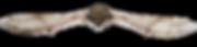 Chauve-souris en vol