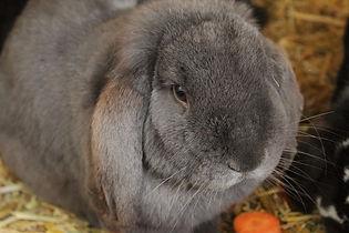 rabbit-4933115_960_720.jpg
