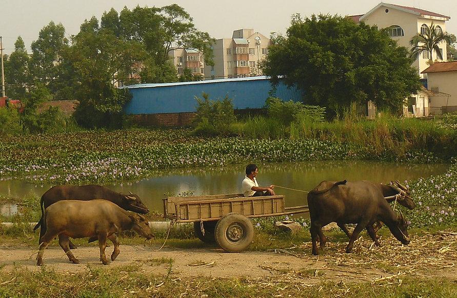 Fusui County - Guangxi Autonomous Region