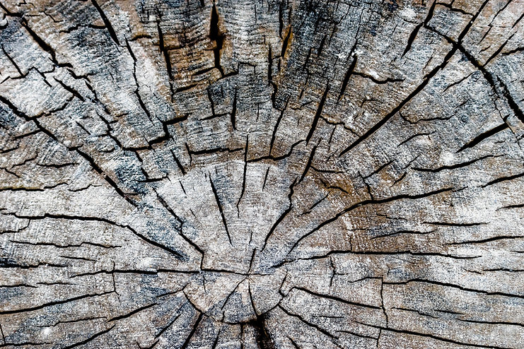 bark-close-up-dry-593152.jpg