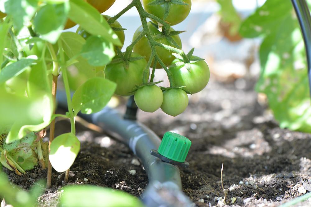 Sistema de riego automatico para huerto y jardineras