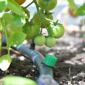 Que les teves plantes no passin set aquest estiu.