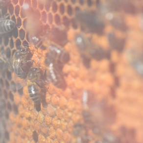 Les abelles les nostres amigues. T'ajudem a cuidar-les