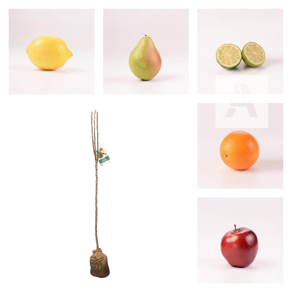 arbres fruiters