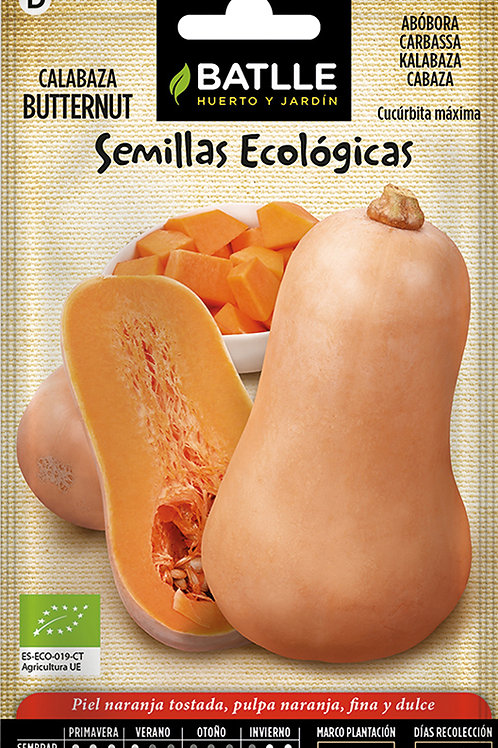 Carbassa Butternut - Eco